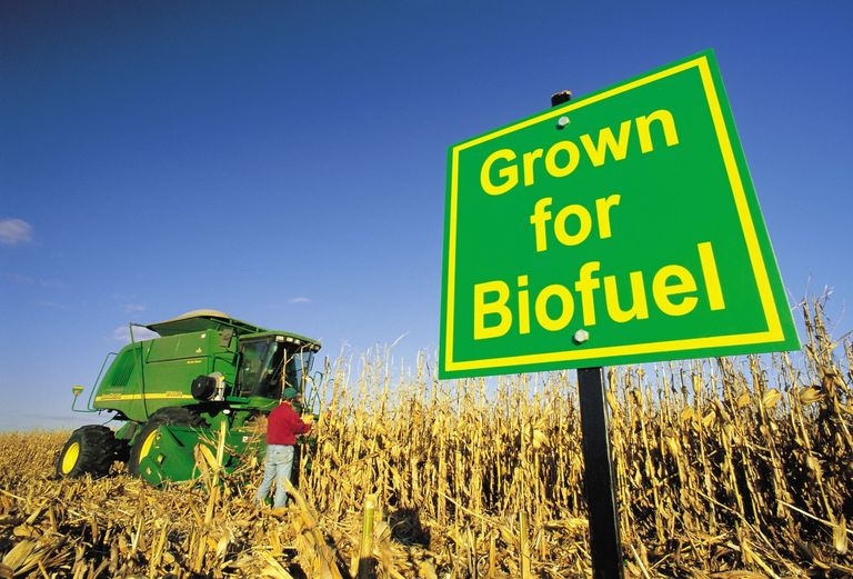 Biofuels might not be the answer…