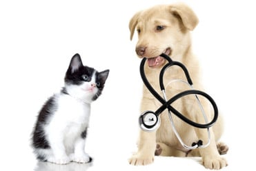 US employers take the lead covering pet insurance, should the UK follow?